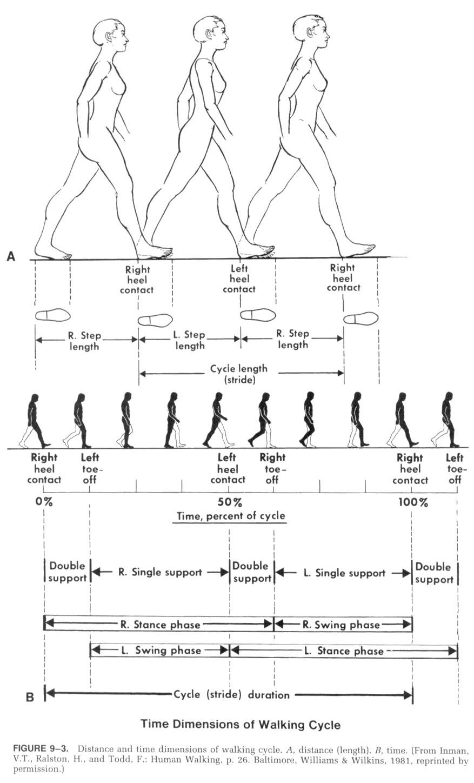 Camminare, gambe niomeccaniche